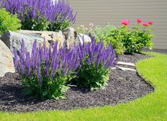 Most perennials need to be divided every couple of years to keep them healthy and flourishing. Treat the chore as a chance for you to multiply your landscape plants quickly and easily.