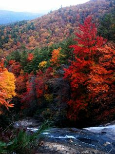 North Carolina Mountains!--(looks just like this when Fall is arriving and more vibrant in prime season) ♥