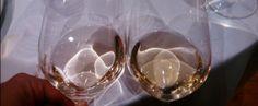 Cata de vino blanco: secos   Solorioja.com Vinoteca Rioja Gonzalez Puras Joven vs Becquer Fermentado en barrica