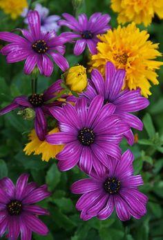 Purple & Yellow  Flowers Garden Love