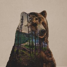 Bear Lake Art Print by Davies Babies … Art D'ours, Art Et Nature, Drawn Art, Lake Art, Bear Pictures, Bear Art, Artist Canvas, Double Exposure, Fantasy Art