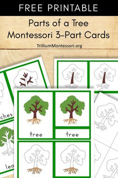 Free Printable parts of a tree Montessori 3 part cards Creative Curriculum Preschool, Montessori Science, Montessori Homeschool, Montessori Classroom, Montessori Toddler, Free Preschool, Preschool Activities, Montessori Bedroom, Montessori Elementary