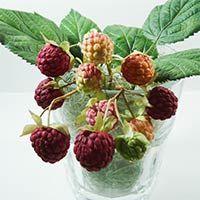 Как сделать ягоды малины из фоамирана