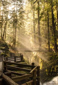 ~~Sol Duc Falls | drenched in sunlight at twilight, Port Angeles, Washington |  by Aditi Kulkarni~~