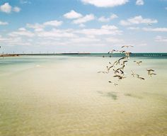 HIggs Beach view with a flock of seagulls. Shot with Lomo 200 film on a Fuji GF670.
