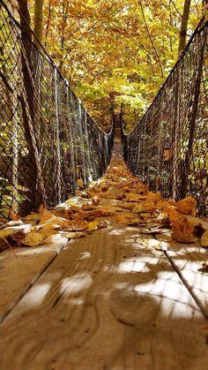 Canopy walk Michigan fall bridge Outside Boyne City Michigan Vacations, Michigan Travel, Lake Michigan, Northern Michigan, Michigan Facts, Fall In Michigan, Charlevoix Michigan, Marquette Michigan, Petoskey Michigan