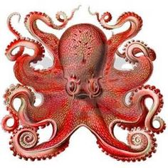 Red Octopus - - Yahoo Image Search Results