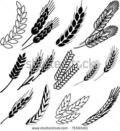 Barley Grain Wheat ears collection. Good to have for making replica grain sack fabric.