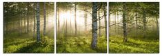 Enchanted Forest Photography Triptych Print 3 Panel Landscape Photography - Frameless 3 Panel Photography Print of Enchanted Forest - Digitally Printed on Vinyl - Mounted to 1-inch thick MDF Wooden Fr