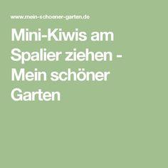 Mini-Kiwis am Spalier ziehen - Mein schöner Garten