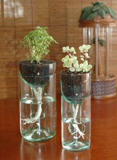 Ideas eco. These are pop bottles? How pretty