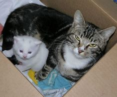 Stray tabby mama and her little white kitten