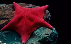 You can touch sea stars and learn more about them in the Polar Play Zone exhibit at #Shedd #Aquarium.