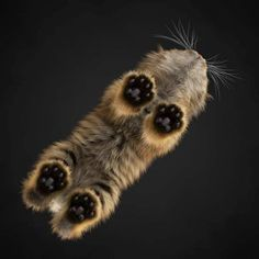 His paws became sweaty, leapt out of my arms & ran as a fast as his pink paws could take him to a window ledge. He looked back at me & took a flying leap, gliding through the air to the ground 20 feet below. He hid for three days before sneaking back in when no one was looking.