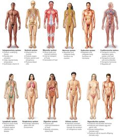 Body Organization and Homeostasis - Biology of Humans