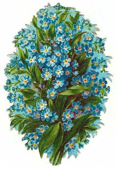 Forget-me-not vignette