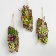 """Lend succulent style to your space with our lifelike hanging decor. Each piece features a cheerful mix of succulents perched on a mossy strip of """"bark"""" and strung with a rustic jute hanger."""