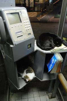 Public telephone in Japan. Also doubles as a cat hostel.