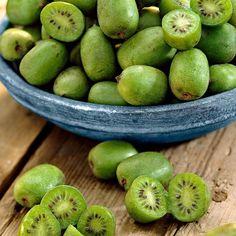 Actinidia 'ISSAI' | slovensketrvalky.sk | SlovenskeTrvalky.sk Kiwi Issai, Plantation, Flower Nails, Ficus, Exotic Flowers, Plum, Avocado, Fruit, Food