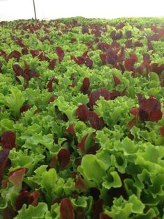The farm's mission is to provide fresh, naturally-grown produce to the people of West Michigan at a fair price.