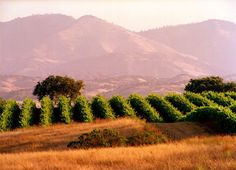 Gainey Vineyard, Santa Barbara, CA