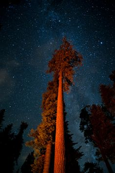 Milky Way and Sequoia by Greg Hines, via 500px, Kings Canyon National Park