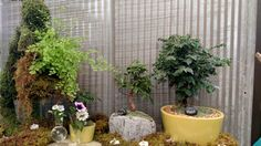 Serenity garden with bonsai trees.