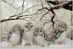These owls are breath taking, I applaud the artist who made them, Helen priem.