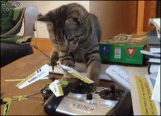 #cat #lol #helicopter #funny