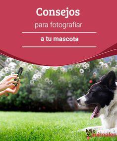 Consejos para fotografiar a tu mascota Todos queremos conservar recuerdos de las personas o animales importantes en nuestras vidas. Te damos breves consejos para fotografiar a tu mascota. #fotos #mascotas #consejos #recuerdos