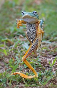 Kung fu froggy! Everybody likes Kung fu fighting