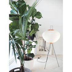 home design classics from the online store on loan feathers Lily. Noguchi Lamp, Isamu Noguchi, Floor Lamp Makeover, Japanese Paper Lanterns, Lampe Art Deco, Traditional Lanterns, House Lamp, Tall Lamps, Bedroom Lamps