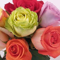 proflowers yellow roses