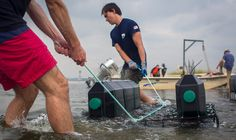 Oysters Are Nearly Extinct in New York Waters. Meet the Team Trying to Coax Them…