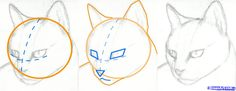 how to draw a cat head, draw a realistic cat step 2