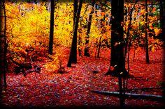 Прогулка по осеннему лесу