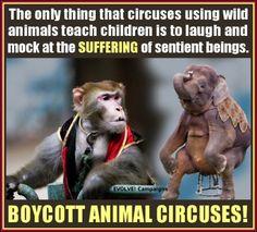 Boycott Animal Circuses!