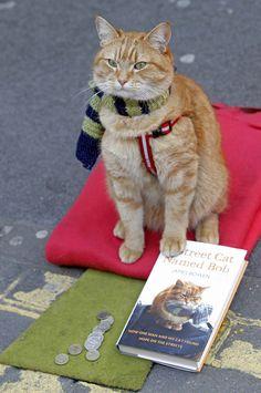 Bob the cat - perhaps suggesting a book to read. L'histoire vraie du chat des rues et de son maître sdf.