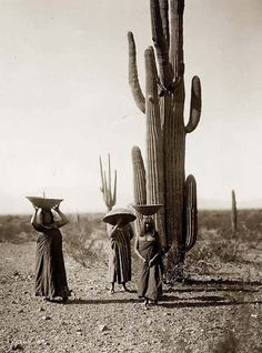 Saguaro Fruit Gatherers from the Maricopa Tribe. It was taken in 1907 by Edward S. Curtis.The image shows Three Maricopa women with baskets on their heads, standing by Saguaro cacti.