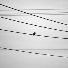 Black and White Bird Photography, Lonely Bird on Wire, Pigeon Art, Pigeon Silhouette, Nursery Art Baby Decor