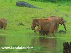 Thekkady Idukki Kerala