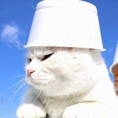 nunca nem vi // rants - icons de gatos #metadinhas - Wattpad