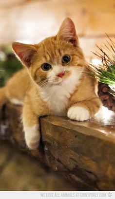 sweet gingercamas para gatos