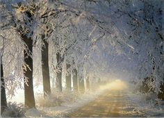 beautiful trees with natural light shining through