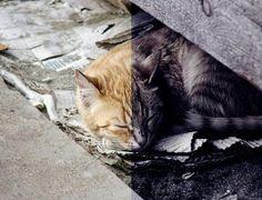 Edición de colores sobre un gato.