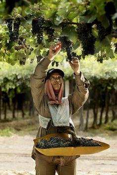 hand-picked grapes by Familia Zuccardi, Te presentamos todas nuestras Bodegas amigas. La mejor selección de vinos & cervezas importadas con importante stock Las mejores tablas de Quesos & Fiambres Gourmet de Rosario HOME www.abarroterosario.com PINTEREST http://pinterest.com/abarroterosario/ LINKEDIN http://www.linkedin.com/profile/view?id=201396710=tab_pro GOOGLE PLUS https://plus.google.com/107097700545505997425/posts TWITTER https://twitter.com/AbarroteRosario