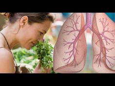 Top 3 Herbs To Cleanse Your Lungs Of Dust Mold Bacteria And Chemicals Life well lived - Bonny Bae Natural Cancer Cures, Natural Health Remedies, Natural Cures, Home Remedies, Detox Juice Recipes, Detox Drinks, Receding Gums, Cancer Fighting Foods, Cure Diabetes