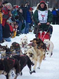 Iditarod racer