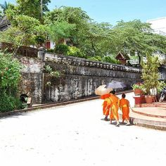 Young monks on the move in Luang Prabang, Laos, a colonial town edged by the Mekong where jungle encroaches on French mansions and fresh baguettes are as common as rice.