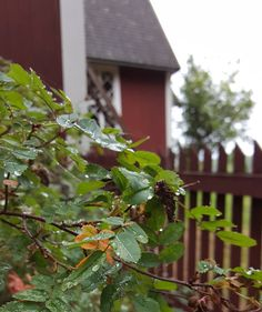 Nice Monday and new week to you  #sade #rainy #syyskuu #september #syksytulee #syksy #fall #seasonsoffinland #lifestyleblogger #nelkytplusblogit #åblogit #ladyofthemess
